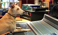 studio-dog-crop-icon1